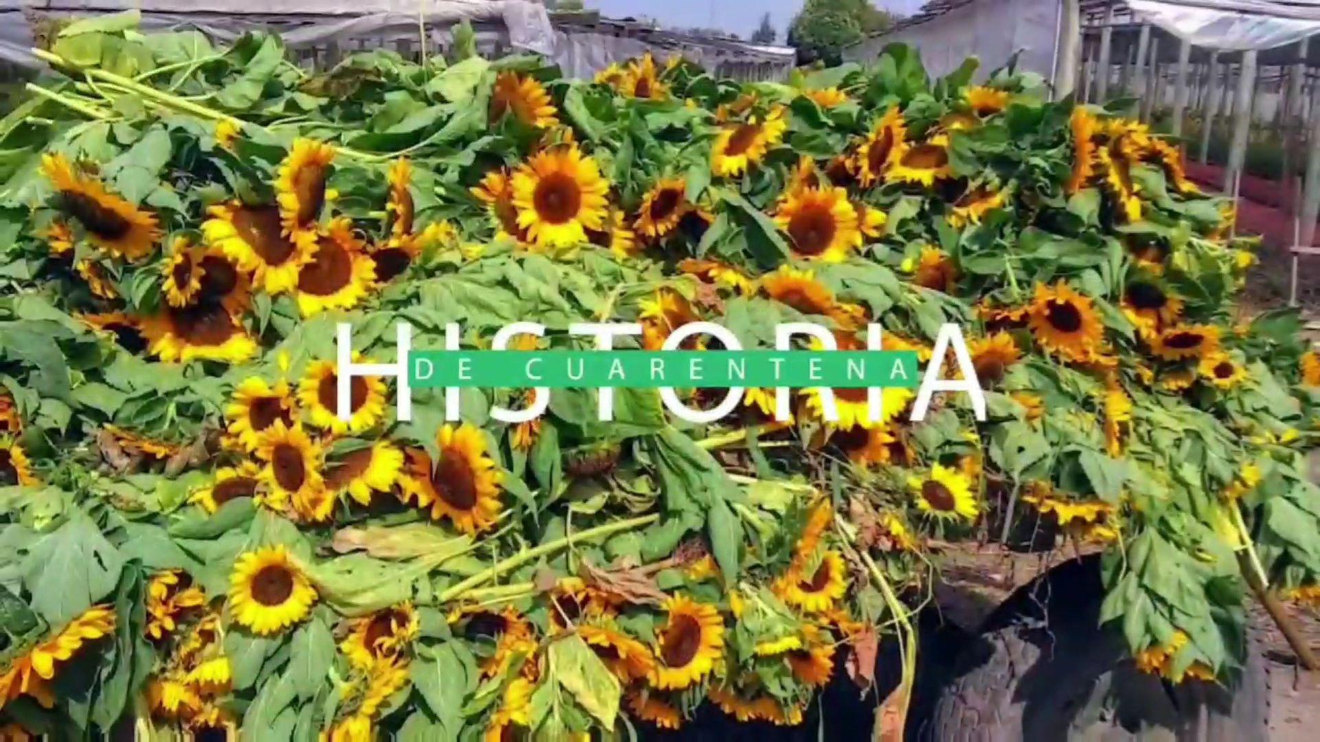 #HistoriasDeCuarentena: La grave situación que viven los productores de flores y plantas